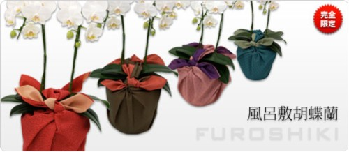 オーキッドスタイルの敬老の日 胡蝶蘭 ふろしき包みギフト